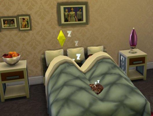 Katze im Bett1.jpg