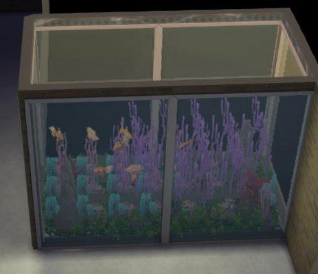 mein eigenes Aquarium.JPG
