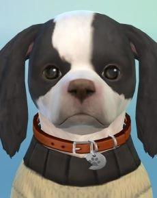 1. Choco Hund.JPG