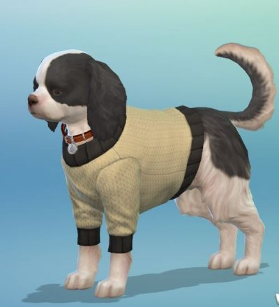 Choco Hund (im CAS).JPG