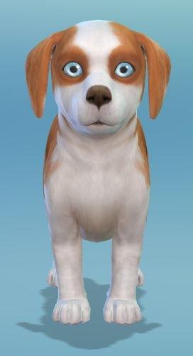 2. Blue Eyes Hund.JPG