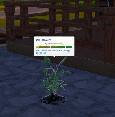Muellpflanze1.jpg