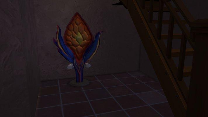43 Pflanze im Keller.jpg