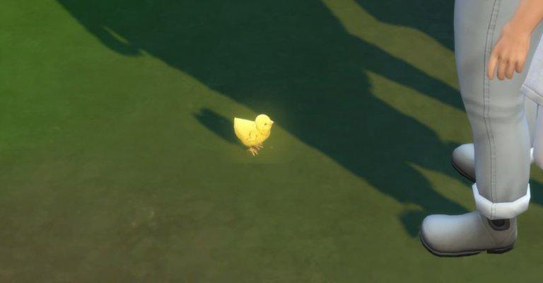 Goldie aus dem goldenen Ei 3.jpg