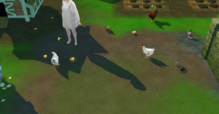 Pures (Tier)leben auf meiner Farm.jpg
