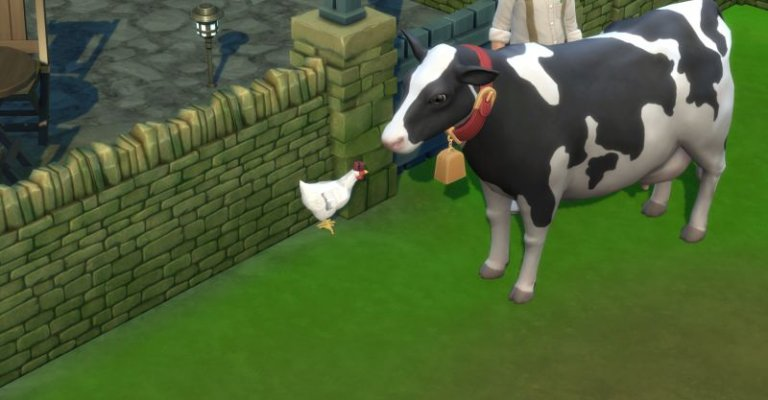 Neugieriges Huhn Clara und Kuh Flecki.jpg