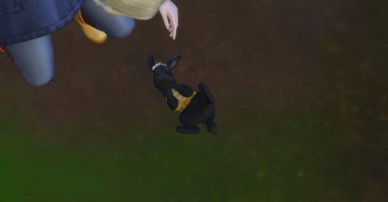 Blacky, das schwarze Häschen 7.jpg